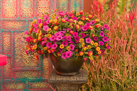 Plant Combination Ideas For Container Gardens Bigger Really Is Better Tips On Container Gardening Proven Winners