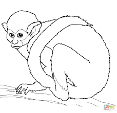 squirrel monkey coloring page free printable coloring pages