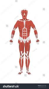 kinds of anatomy images learn human anatomy image