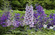 Summer Flowers For Garden - delightful tall flowers for garden tall purple flowers