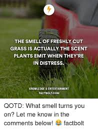 Grass Memes - 25 best memes about the smell of fresh cut grass the smell