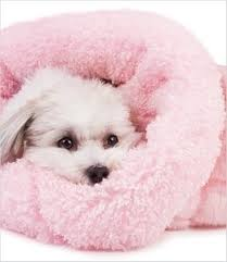 Cuddle Cup Dog Bed 117 Best Lil Fury Baby U0027s Images On Pinterest Dogs Chihuahua