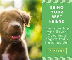 Cottages That Allow Dogs by South Carolina Dog Friendly Travel Guide