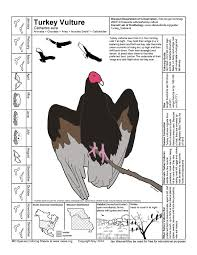 coloring pages of animals in their habitats missouri species coloring sheets