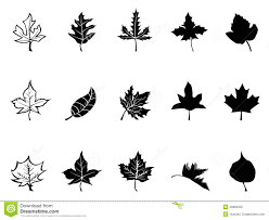 black maple leaves silhouette royalty free stock photo image