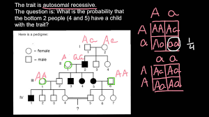 genetics practice problems pedigree tables how to solve pedigree probability problems youtube