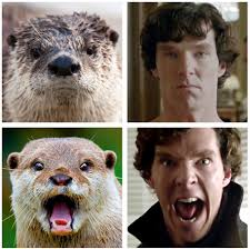 Cumberbatch Otter Meme - benedict cumberbatch posed like an otter and punched a teddy bear