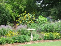 plants native to maryland search for excellence extension master gardener