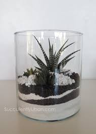 succulent terrarium black and white san diego delivery only