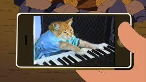 Keyboard Cat Meme - fatso american dad wikia fandom powered by wikia