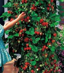 cheap balcony vegetable find balcony vegetable deals on line at