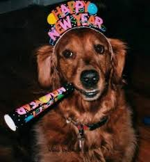 new year s setters pet safety new year s tips to ring in a happy new year animal fair