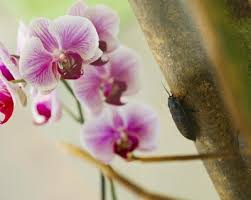 orchid pest management treating common orchid flower pests