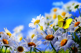 Nice Flowers Flower Lovely Fresh Nice Flowers Flower Wallpapers For Ipad Hd 16