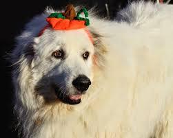 14 Best Dog Halloween Costumes Of 2014