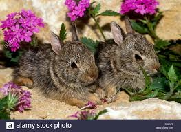 two baby rabbits sit on warm rocks in garden surrounded by wild