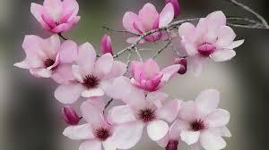 flower nature flowers buds lovely splendor beauty petals leaves