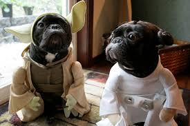 Star Wars Dog Halloween Costumes U0027s Posted Photos French Yoda