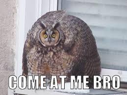 Dat Ass Cat Meme - best memes for facebook comments 5 funny memes