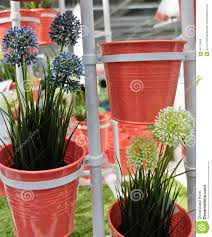 blue and white artificial allium giganteum in metal pots stock
