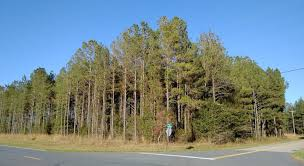 florida land and acreage for sale 5 acres for sale pine trees
