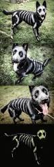 25 funny dog halloween costumes ideas dog