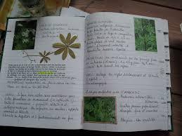 cuisine plantes sauvages comestibles apprendre facilement
