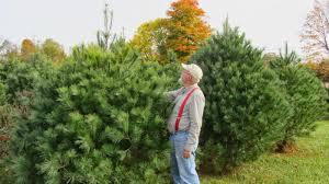 glass family farm llc christmas trees