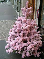 pink tree thanks to it lovely i now a pink