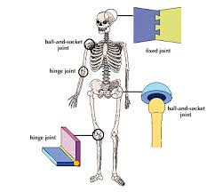 the skeletal system multiple choice questions