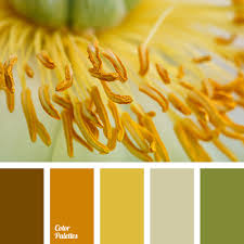 Warm Orange Color Brown And Orange Color Palette Ideas