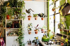 plants at home my 1200sqft inside summer rayne oakes williamsburg oasis filled