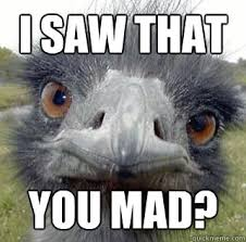 Ostrich Meme - mad ostrich meme ostrich best of the funny meme