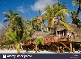 beach huts and palm trees cook islands stock photo royalty free