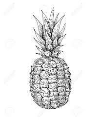 vector hand drawn pineapple tropical summer fruit engraved style
