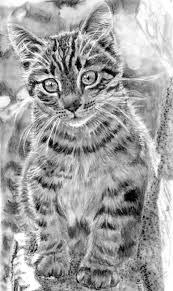 imagenes a lapiz de gatos como dibujar el retrato de un gato a lápiz para los curiosos