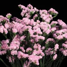 statice flowers statice pink 11 bunches florasource