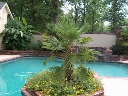 windmill palm trachycarpus fortunei tree 10 seeds amazon ca