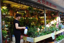 Flower Wholesale Life Of Guangzhou Markets Of Flowers And Pets
