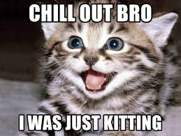 Chill Out Bro Meme - chill out bro i was just kitting happy kitten meme generator