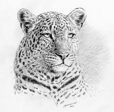 coloring pages leopard face drawing leopard face drawing