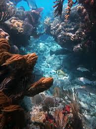 Wisconsin snorkeling images 11 best snorkeling spots in america ecowatch jpg