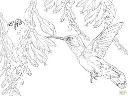 bee hummingbird coloring page free printable coloring pages