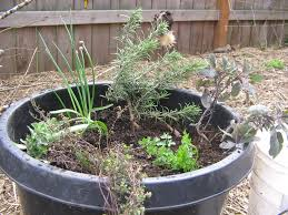 well suited design container herb garden perfect ideas how to grow