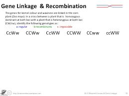Dihybrid Crosses Worksheet Dihybrid Crosses Gene Linkage And Recombination