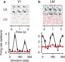 mice can use second order contrast modulated stimuli to guide