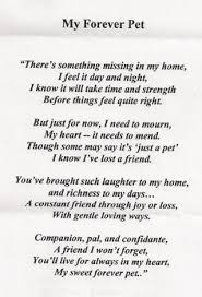 grieving the loss of a dog 182 best grief and pet loss images on pets animales and