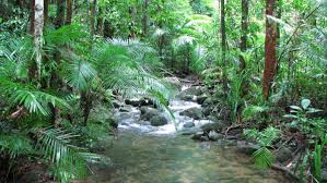 Plants In The Tropical Rain Forest - tropical rainforest on emaze
