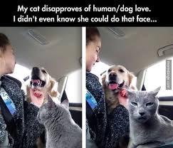 jealous cat meme by kayneal memedroid