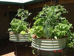 beautiful aquaponics systems suburban farmer suburban farmer